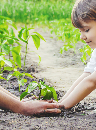 A child plants a plant in the garden. Selective focus. nature.