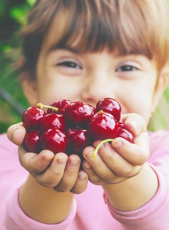 The child is picking cherries in the garden. Selective focus. Banco de Imagens - 122775159