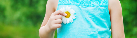 the girl is holding chamomile flowers in her hands. Selective focus. nature. Standard-Bild