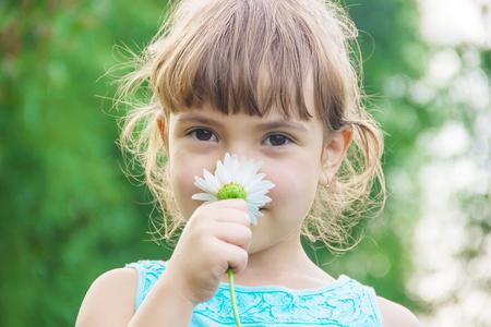 la niña sostiene flores de manzanilla en sus manos. Enfoque selectivo.