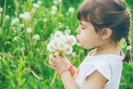 girl blowing dandelions in the air. selective focus. Banco de Imagens