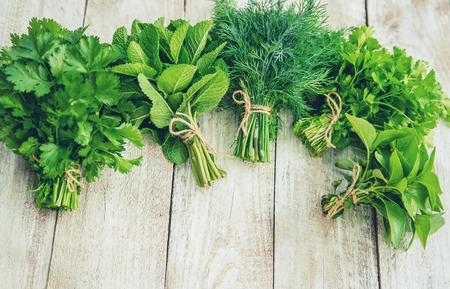 Verduras frescas caseras del jardín. Enfoque selectivo. naturaleza.