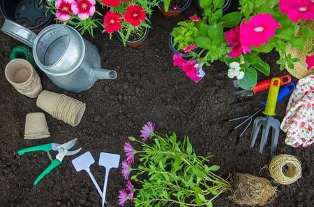Ein kleines Mädchen pflanzt Blumen. Der junge Gärtner. Selektiver Fokus. Natur.