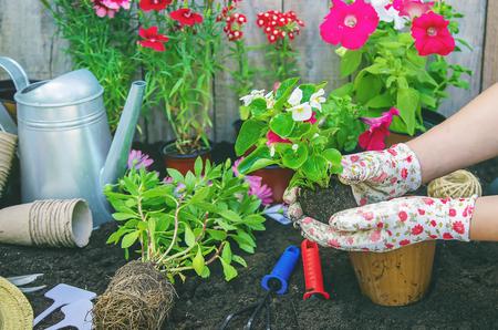 Ein kleines Mädchen pflanzt Blumen. Der junge Gärtner. Selektiver Fokus. Natur. Standard-Bild