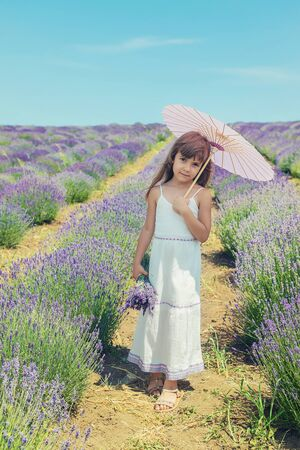 A child in a flowering field of lavender. Selective focus. nature.