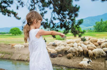 A child looks at a flock of sheep. Travel in Georgia. Selective focus. 版權商用圖片
