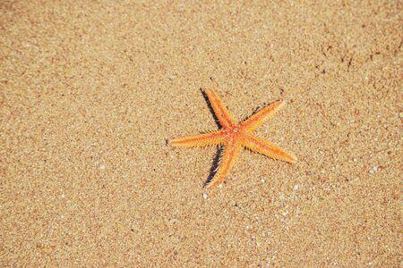 estrella de mar en la playa en la arena. Enfoque selectivo. naturaleza.