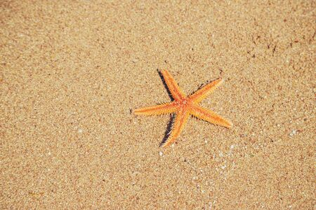 starfish on the beach on the sand. Selective focus. nature.