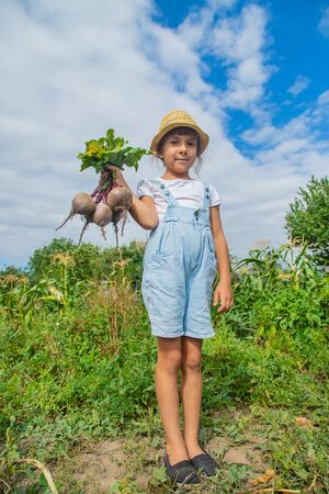 A child with a bunch of beets in the garden. Selective focus. Stock Photo