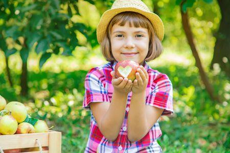 Kind pflückt Äpfel im Garten im Garten. Selektiver Fokus.