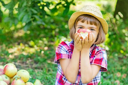 bambino raccoglie mele in giardino in giardino. Messa a fuoco selettiva.