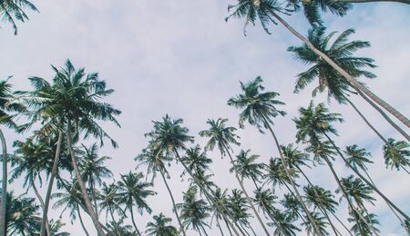 Coconut trees on the island. Selective focus. nature.