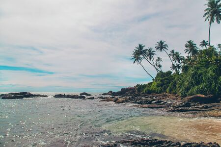 Ocean Sri Lanka. Nature and palm trees. Selective focus. Nature.