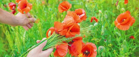 man collects a bouquet of wildflowers. Poppies selective focus. nature.