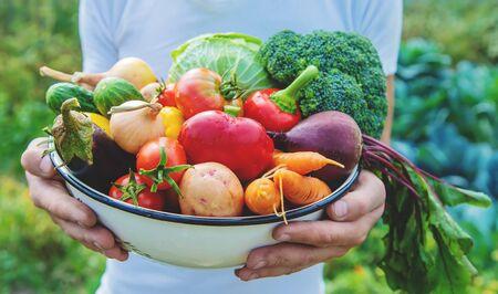 Man boer met zelfgemaakte groenten in zijn handen. Selectieve aandacht. natuur. Stockfoto