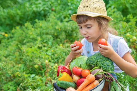 Child in the garden with vegetables in his hands. Selective focus. nature.