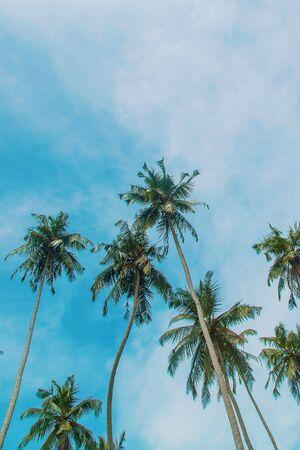 Cocotiers sur l'île. Mise au point sélective. la nature. Banque d'images