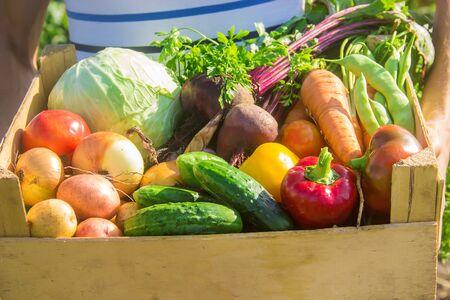 庭に野菜を持つ男。選択的フォーカス。自然。 写真素材