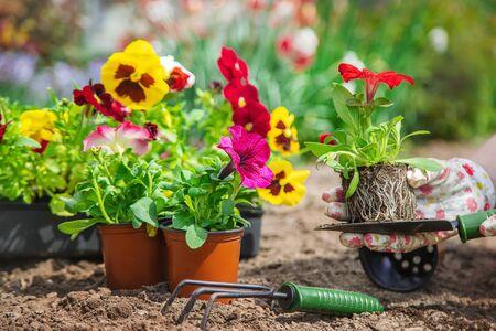 园丁正在种植花园。选择性焦点。自然。