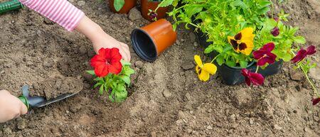 A child plants a flower garden. Selective focus. nature.