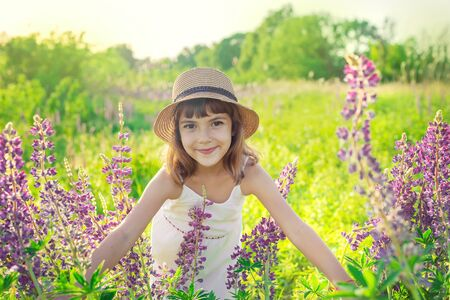 Child photo shoot in a lupine field. Selective focus. Stock Photo