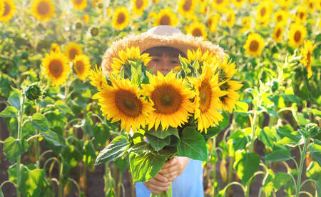Child in a field of blooming sunflowers. Selective focus. nature. 스톡 콘텐츠 - 152406383