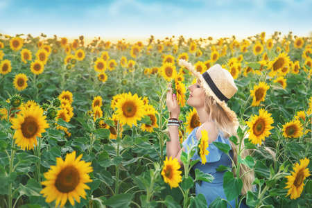 Woman in a field of sunflowers. Selective focus. nature. 스톡 콘텐츠