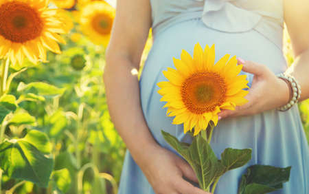 A pregnant woman in a field of sunflowers. Selective focus. nature. 스톡 콘텐츠