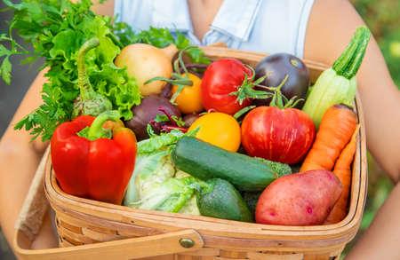 子供は野菜の収穫を手に持っている。選択的フォーカス。自然。