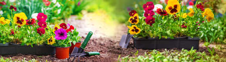 Planting a flower garden, spring summer. Selective focus. nature.