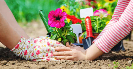 Child and mother plant flowers in the garden. Selective focus. nature. Standard-Bild