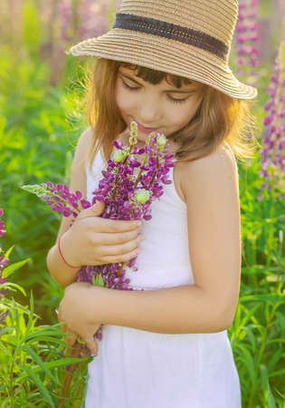Child photo shoot in a lupine field .season allergies. Selective focus. nature.l