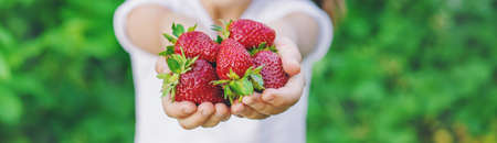 A child with strawberries in the hands. Selective focus. food.