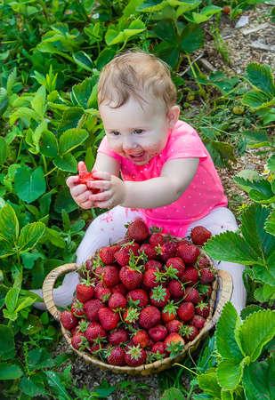 Baby eats strawberries in the garden. Selective focus. Summer.