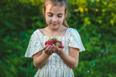 The child picks strawberries in the garden. Selective focus. Nature. Standard-Bild