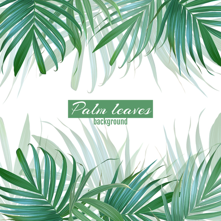 Vector palm leaves background. Tropical banner. Stylish poster w