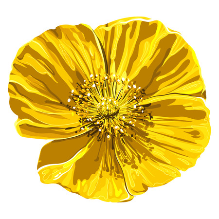 Vector realistic flower close-up. Floral isolated on white background. Spring or summer design element.