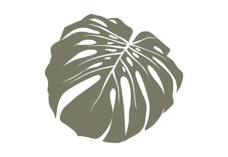 Monstera leaf vector illustration isolated on white. Exotic tropical green leaves. Minimalist shape Ilustração