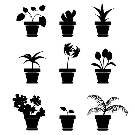 plant pot: Vector Home Plants Clipart