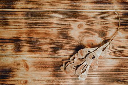 ash seeds lay on the wood background texture. Flat lay 免版税图像