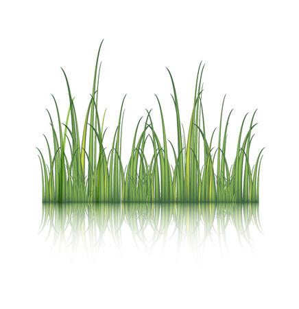 grass vector: Green grass, vector