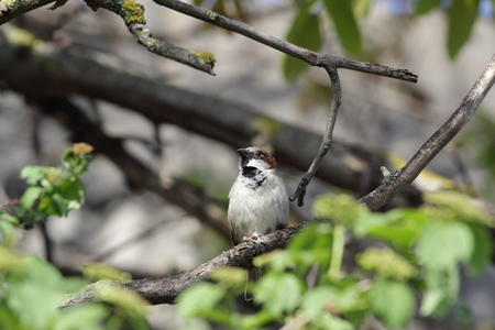 Sparrow resting on a branch