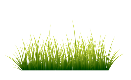 reflection of life: Green grass