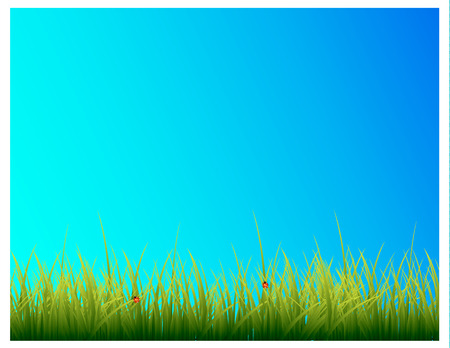 Green grass and blue sky.