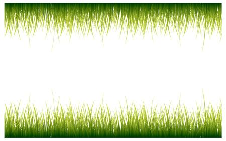 grass border: Green Grass Border, Vector Illustration