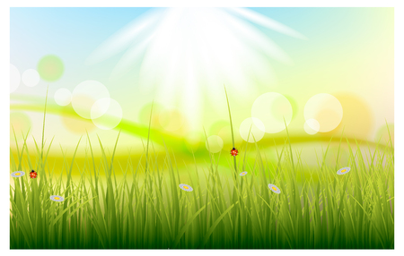 Vector illustration of a beautiful summer background with green grass Иллюстрация