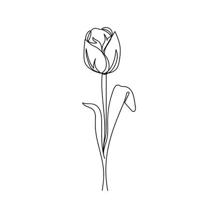 Spring flower. Tulip. One line drawing. Vector illustration continuous line drawing.