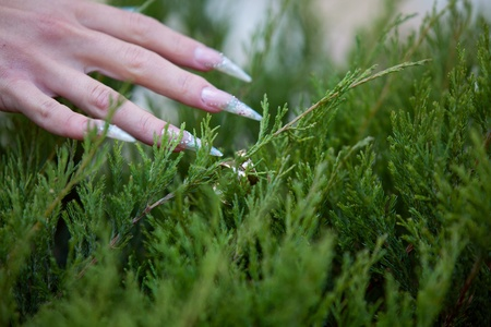 wedding rings in the grass photo