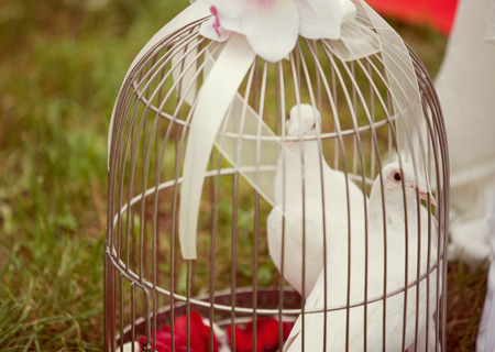 Two wedding doves as love symbol photo