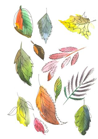 Set Watercolor paintings Isolated on white background. Clip art berries, colored leaves